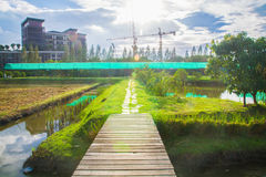 Τομέας ορυζώνα στην πόλη και το λάμποντας ουρανό Στοκ εικόνα με δικαίωμα ελεύθερης χρήσης