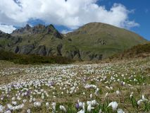 Τομέας λουλουδιών βουνών στοκ φωτογραφία με δικαίωμα ελεύθερης χρήσης