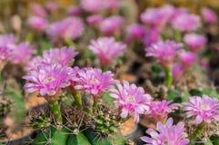 Τομέας λουλουδιών κάκτων Στοκ φωτογραφίες με δικαίωμα ελεύθερης χρήσης