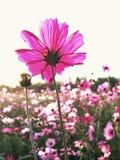 τομέας λουλουδιών κόσμου Στοκ Εικόνες