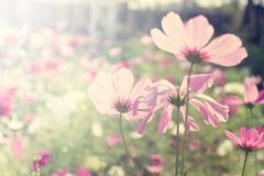 τομέας λουλουδιών κόσμου Στοκ Φωτογραφία