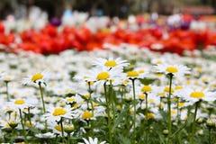 Τομέας λουλουδιών Στοκ φωτογραφίες με δικαίωμα ελεύθερης χρήσης