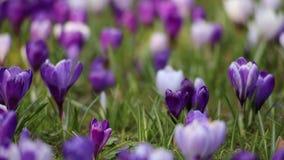 Τομέας λουλουδιών απόθεμα βίντεο