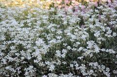 Τομέας λουλουδιών Στοκ εικόνα με δικαίωμα ελεύθερης χρήσης