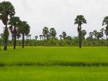 Τομέας πράσινος στοκ φωτογραφίες με δικαίωμα ελεύθερης χρήσης