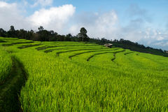 Τομέας ρυζιού, αγροτική θέα βουνού με το όμορφο τοπίο Στοκ Φωτογραφία