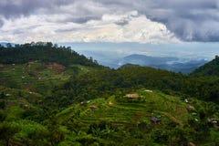 Τομέας ρυζιού βημάτων σε βόρειο της Ταϊλάνδης Στοκ εικόνες με δικαίωμα ελεύθερης χρήσης