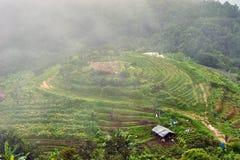 Τομέας ρυζιού βημάτων σε βόρειο της Ταϊλάνδης Στοκ Εικόνες