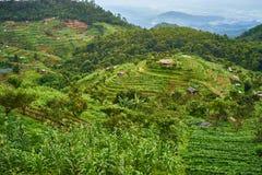 Τομέας ρυζιού βημάτων σε βόρειο της Ταϊλάνδης Στοκ εικόνα με δικαίωμα ελεύθερης χρήσης