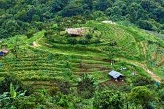 Τομέας ρυζιού βημάτων σε βόρειο της Ταϊλάνδης Στοκ Εικόνα