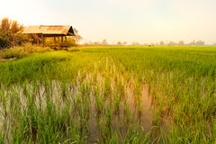 Τομέας ρυζιού και ένα εξοχικό σπίτι Στοκ φωτογραφία με δικαίωμα ελεύθερης χρήσης