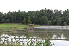 Τομέας ρυζιού και αγρόκτημα ψαριών στοκ φωτογραφίες