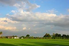 Τομέας ρυζιού και ουρανός σύννεφων Στοκ Φωτογραφία