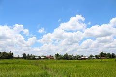 Τομέας ρυζιού με έναν μπλε ουρανό σύννεφων Στοκ εικόνα με δικαίωμα ελεύθερης χρήσης