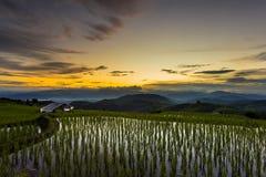 Τομέας ρυζιού πεζουλιών πέρα από το βουνό Στοκ Εικόνες