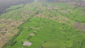Τομέας ρυζιού που πετά άνωθεν τον κηφήνα Εναέρια φυτεία ρυζιού άποψης πράσινη σε Guangxi, Κίνα Γεωργική βιομηχανία r φιλμ μικρού μήκους