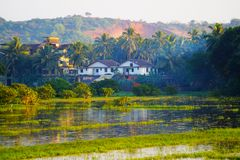 Τομέας ρυζιού σε Goa, Ινδία στο ηλιοβασίλεμα Στοκ εικόνα με δικαίωμα ελεύθερης χρήσης