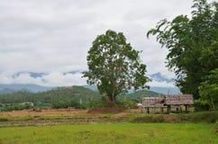 Τομέας ρυζιού σε Pai στο γιο Ταϊλάνδη της Mae Hong στοκ φωτογραφίες με δικαίωμα ελεύθερης χρήσης