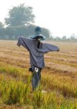 Τομέας ρυζιού (σκιάχτρο) στοκ φωτογραφίες