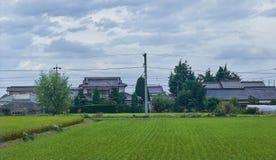 Τομέας ρυζιού στην επαρχία στην Ιαπωνία, 08 26 2018 Στοκ Εικόνες