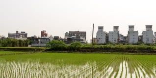 Τομέας ρυζιού στην περιοχή Taoyuan, τον Απρίλιο του 2016 της Ταϊβάν Στοκ Φωτογραφία