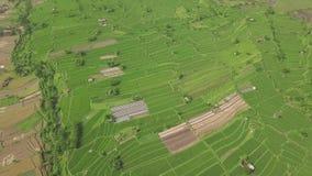 Τομέας ρυζιού στο ασιατικό χωριό που πετά άνωθεν τον κηφήνα Εναέρια φυτεία ρυζιού άποψης πράσινη σε Guangxi, Κίνα _ φιλμ μικρού μήκους