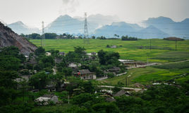 Τομέας ρυζιού στο καλοκαίρι σε βόρειο, Βιετνάμ Στοκ φωτογραφίες με δικαίωμα ελεύθερης χρήσης