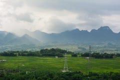 Τομέας ρυζιού στο καλοκαίρι σε βόρειο, Βιετνάμ Στοκ Φωτογραφία