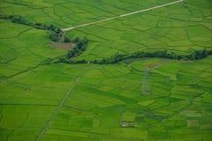 Τομέας ρυζιού στο καλοκαίρι σε βόρειο, Βιετνάμ Στοκ εικόνα με δικαίωμα ελεύθερης χρήσης