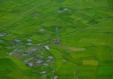 Τομέας ρυζιού στο καλοκαίρι σε βόρειο, Βιετνάμ Στοκ Εικόνες