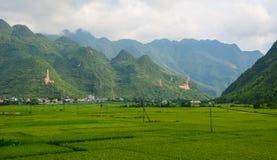 Τομέας ρυζιού στο καλοκαίρι σε βόρειο, Βιετνάμ Στοκ Φωτογραφίες
