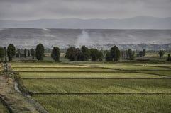 Τομέας ρυζιού, τομείς Στοκ εικόνα με δικαίωμα ελεύθερης χρήσης