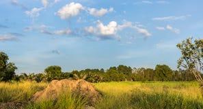 Τομέας ρυζιού τοπίων με το ανάχωμα στο middlefield και τον όμορφους μπλε ουρανό και τα σύννεφα Στοκ Εικόνα