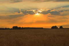Τομέας σίτου ηλιοβασιλέματος Στοκ Εικόνα