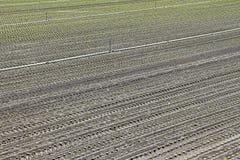 Τομέας σαλάτας Στοκ φωτογραφία με δικαίωμα ελεύθερης χρήσης