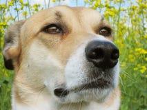 Τομέας σκυλιών και βιασμών, πορτρέτο (41) Στοκ εικόνα με δικαίωμα ελεύθερης χρήσης