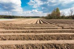 Τομέας σπαραγγιού με την καλά δομημένους γη και το μπλε ουρανό Στοκ φωτογραφίες με δικαίωμα ελεύθερης χρήσης