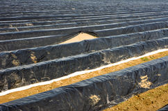 Τομέας σπαραγγιού που καλύπτεται με το platic φύλλο αλουμινίου στοκ φωτογραφία με δικαίωμα ελεύθερης χρήσης