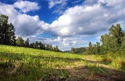 Τομέας στο δάσος αναμμένο από τον ήλιο που βγαίνει από κάτω από τα σύννεφα Στοκ Εικόνες
