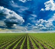 Τομέας σόγιας που ωριμάζει στην εποχή άνοιξης, γεωργικό τοπίο Στοκ φωτογραφία με δικαίωμα ελεύθερης χρήσης