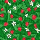 Τομέας της άγριας δασικής φράουλας πρότυπο άνευ ραφής συρμένο χέρι απεικόνιση αποθεμάτων