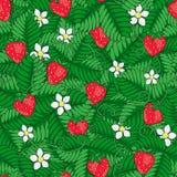 Τομέας της φράουλας άνευ ραφής καλοκαίρι προ&ta συρμένο χέρι διάνυσμα διανυσματική απεικόνιση