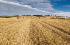 Τομέας της Farmer, Γιορκσάιρ, συσσωρευμένο άχυρο balesc Στοκ Εικόνα