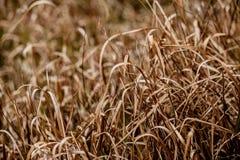 Τομέας του ξηρού ρυθμού χλόης, θερμός τόνος χλόης στοκ εικόνες