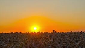 Τομέας του ώριμου σίτου και του ηλιοβασιλέματος, χρόνος-σφάλμα φιλμ μικρού μήκους