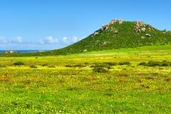 Τομέας των άγριων λουλουδιών δίπλα στη θάλασσα και το πράσινο βουνό Στοκ Εικόνες