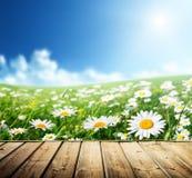 Τομέας των λουλουδιών μαργαριτών