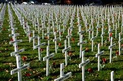 Τομέας των σταυρών για την ημέρα Anzac Στοκ Φωτογραφίες