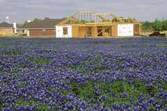 Τομέας των bluebonnets στο βρόχο Rd πόλεων ιτιών ανοίξεων άνθισης TX στοκ φωτογραφίες