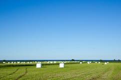 Τομέας των haybales Στοκ εικόνες με δικαίωμα ελεύθερης χρήσης